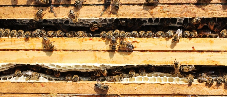 Méhészkedés kezdete